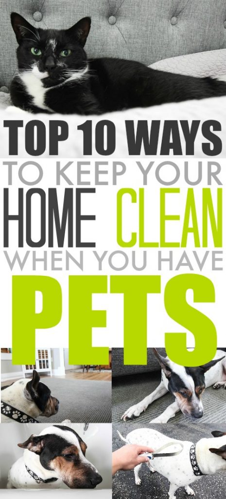 Top Ten Ways To Keep Your Home Clean When You Have Pets