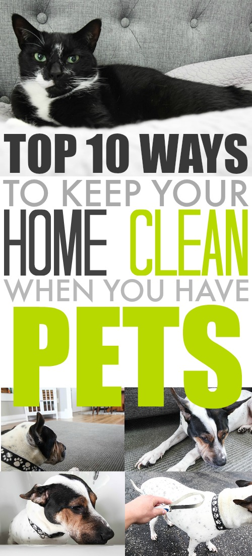 Top ten ways to keep your home clean when you have pets house good - Tips to keep your house more organized ...